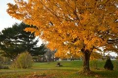 居住在它的最好的家庭秋天 免版税图库摄影