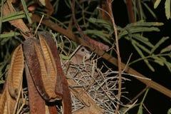 居住在巢沈默的鸟 库存图片
