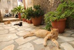 居住在希腊城市科孚岛街道的三只猫  库存图片