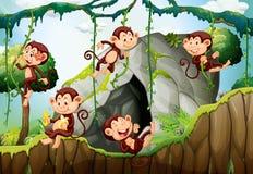 居住在森林的五只猴子 库存例证