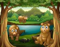 居住在河旁边的三头熊 向量例证