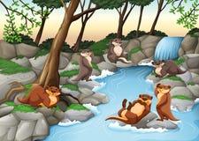 居住在河旁边的海狸 向量例证