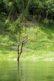 居住在热带雨林的白鹭鸟 库存图片