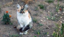 居住在街道上的宠物 免版税库存照片