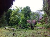 居住在雨林在秘鲁 库存图片