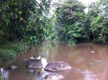 居住在雨林在秘鲁 免版税库存图片