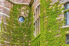 居住本质上-绿色生态大厦 库存图片