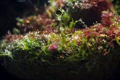 水居住植物 免版税库存照片