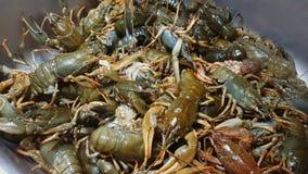 居住欧洲河小龙虾被卖在鱼市上 股票视频