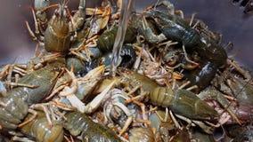 居住欧洲河小龙虾被卖在鱼市上 股票录像