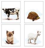 居住的动物在家,猫,山羊,乌龟,母牛 免版税图库摄影