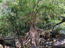 居住的根桥梁cherrapunji自然桥梁 免版税库存照片