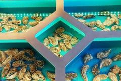 居住的海洋纤巧牡蛎餐馆好的z 免版税图库摄影