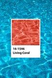 居住的珊瑚游泳场 库存图片