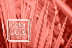 居住的珊瑚颜色棕榈叶背景 免版税库存图片