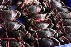 居住螃蟹准备好销售烹调 库存图片