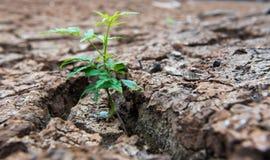 居住以天旱,再生的树,破裂的地面 免版税图库摄影