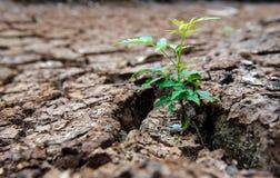 居住以天旱,再生的树,破裂的地面 免版税库存照片