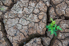 居住以天旱,再生的树,破裂的地面 免版税库存图片
