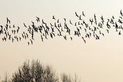 移居的鸟群南部。 免版税库存照片