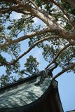 屋顶和古老树日本人建筑学 库存图片