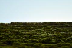 屋顶在LitomÄ› Å™ice的青苔风景 图库摄影