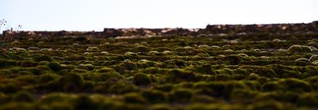 屋顶在LitomÄ› Å™ice的青苔风景 库存照片