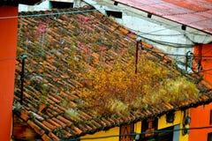 屋顶成长 库存照片
