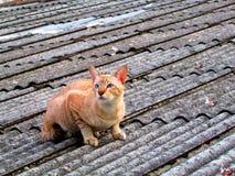 屋顶猫 库存图片