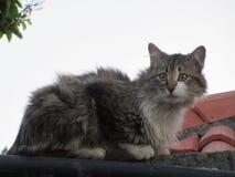屋顶猫 免版税库存照片