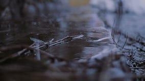从屋顶的下落秋天 影视素材