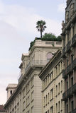 屋顶结构树 库存图片