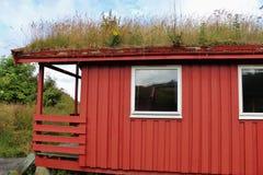 屋顶绿化在挪威, Scandinaiva,欧洲 免版税图库摄影