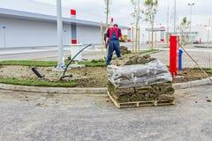 展开的草,应用草皮为新的草坪滚动 免版税库存图片