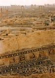展望期扇叶树头榈叙利亚 图库摄影