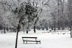 展示和树 免版税库存照片