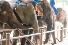 展示的大象圣所 免版税库存照片