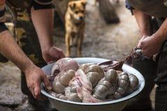屠户排序猪肉在内在一个大碗,并且狗观看他们,乌克兰 库存照片