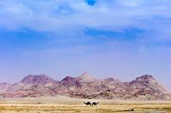 山、沙漠&骆驼 库存图片