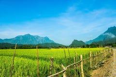 山、米领域和云彩 库存照片