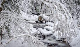 山、雪和小河 库存照片