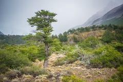 以山为背景的一棵高大的树木在雾 Shevelev 免版税库存照片