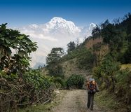 山享用的年轻愉快的背包徒步旅行者 免版税库存图片