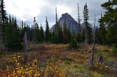 山俯视的秋天叶子! 免版税图库摄影