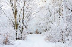 山冬天风景白色雪在韩国 免版税库存图片