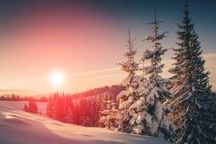 山冬天风景  积雪的针叶树树看法在日出的 减速火箭的过滤器 免版税库存照片