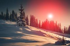 山冬天风景  积雪的针叶树树看法在日出的 减速火箭的过滤器 图库摄影