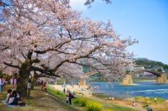 山口,日本- 2011年4月09日:樱花在有Kintai-kyo桥梁的岩国市在背景中 免版税库存照片