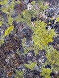 山向长得太大扔石头与Brenta白云岩的青苔作为a 库存图片