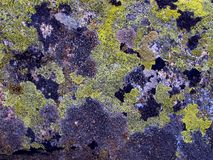 山向长得太大扔石头与Brenta白云岩的青苔 免版税库存图片